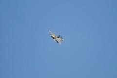 Hyakuri AB_F-15J_221
