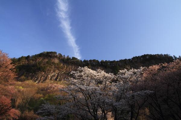 2012_0429_7.jpg