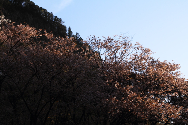 2012_0429_8.jpg