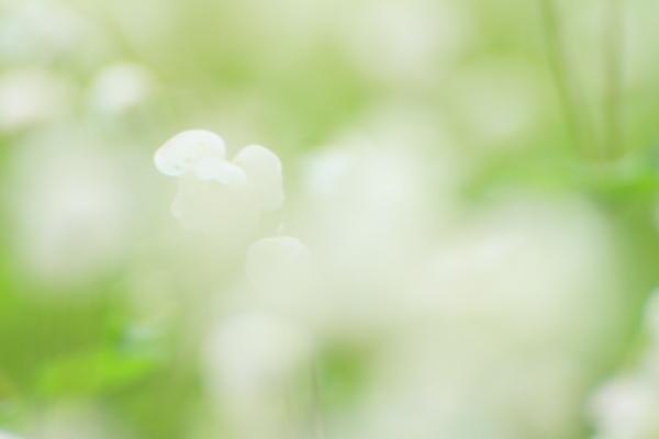 2012_0512_17.jpg