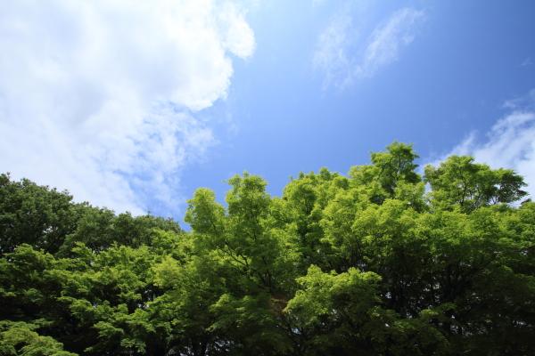 2012_0512_35.jpg