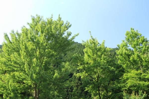 2012_0526_1.jpg
