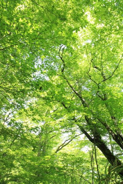 2012_0526_22.jpg