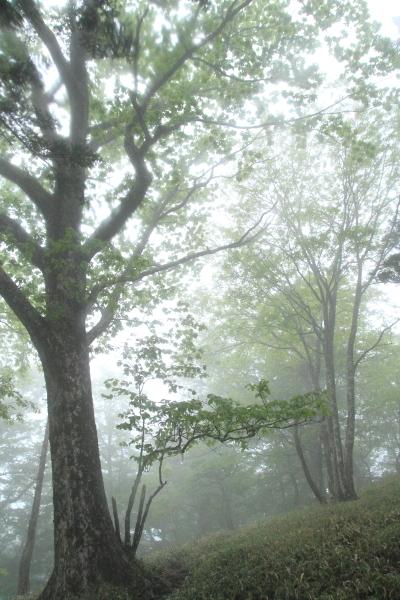 2012_0603_12.jpg
