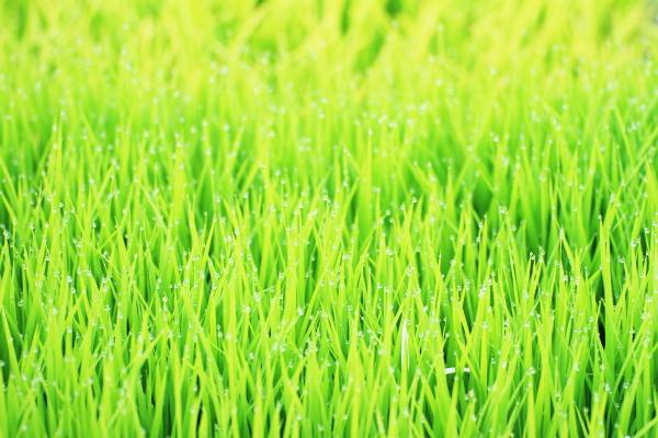 2012_0609_5.jpg
