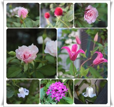 今日の花8-21