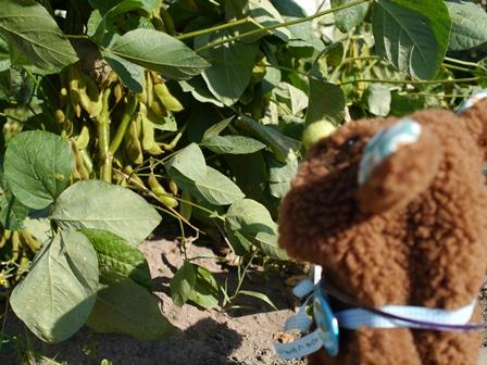 ぱくぱく豆