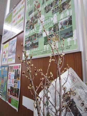 事務局桜の枝