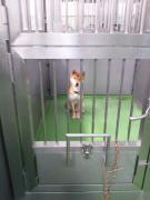 柴犬2012.11.22