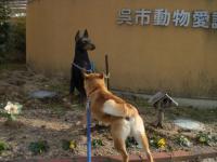 安浦迷い犬