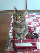 2013/1/7に迷子の猫♂