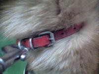 音戸迷い犬赤い首輪