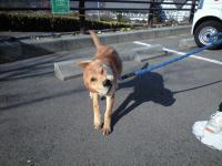 音戸町田原迷い犬