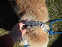 広白石迷い犬首輪