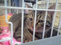 迷い猫2013.3.17