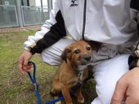 二河グランド迷い犬④2013.2.17