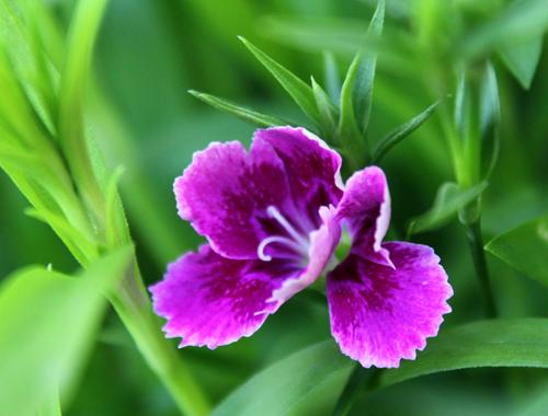 庭の花2013 0181