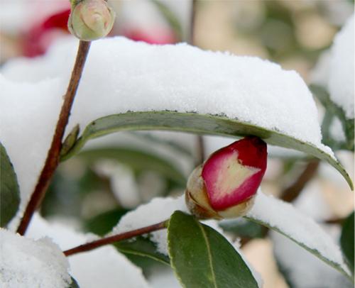 冬20140119 008