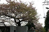 201004_11s.jpg