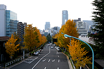2010112211.jpg