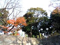 2010121204.jpg
