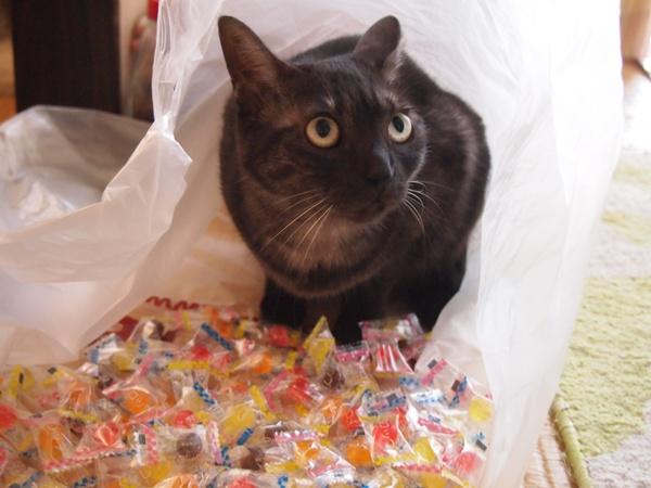 お菓子だ~♪