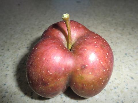 気になるリンゴ