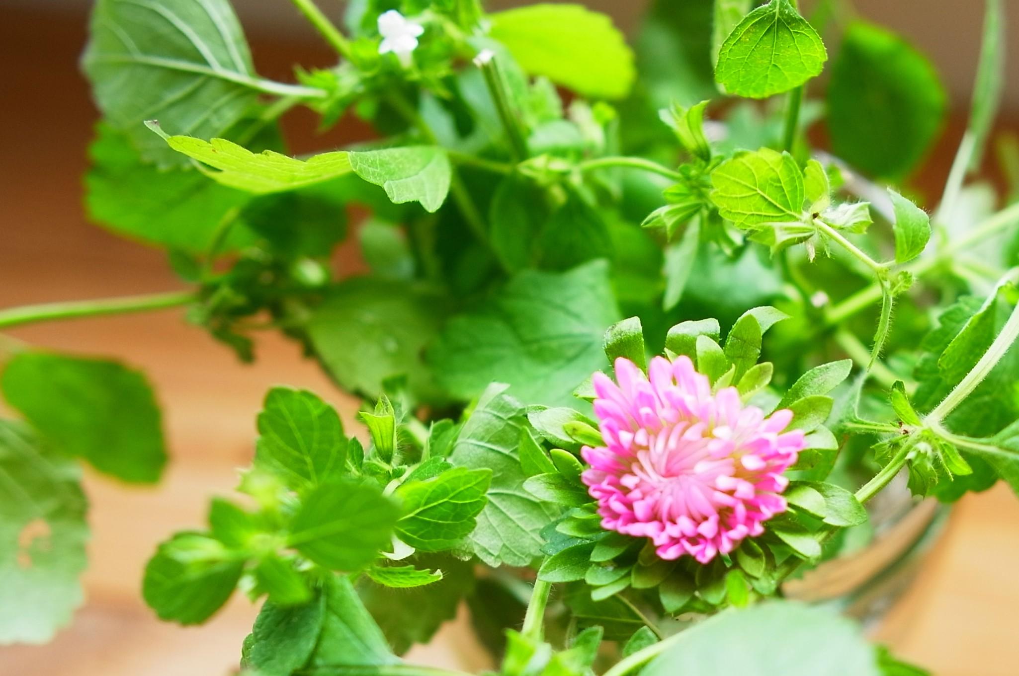 レモンバームと花 トリミング