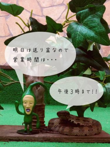 kobito_hime