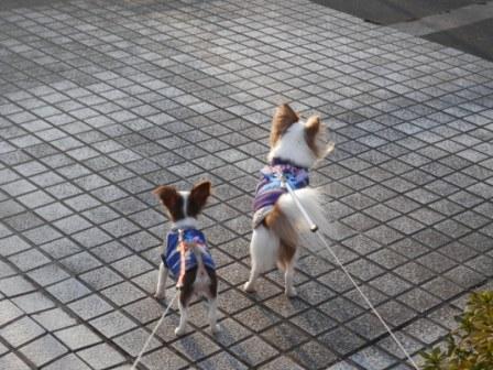 兄ちゃんとお散歩