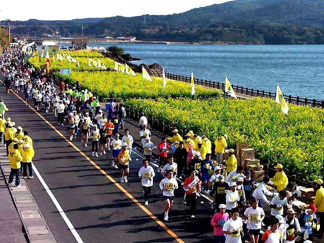 菜の花マラソン写真