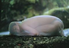 酒井若菜シースルーセミヌード画像