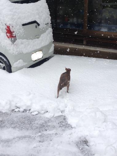 雪の中に入ったものの…。