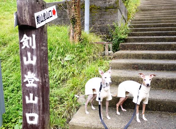 山道より、この神社に続く石段が、一番しんどかった・・。