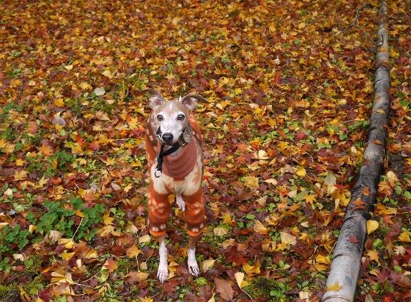 落ち葉でいっぱいのキャンプサイトにて♪