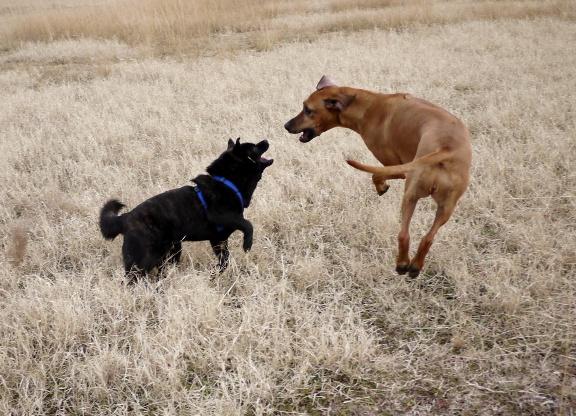 シャロリーは跳ぶというより、普段からこんな風にハチャハチャした動きだけど。