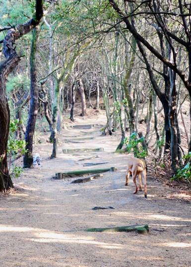 こういう道を歩くと、飼い主も元気になれますね~♪