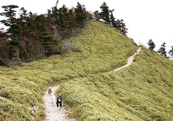 歩きやすそうに見えるけど、実際は石がゴロゴロしてて歩きづらいです。。石灰岩層なんだって。