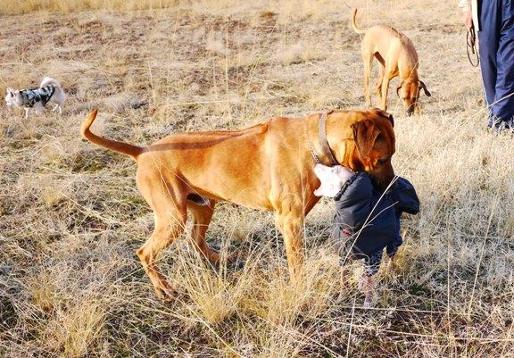トトがこちらに逃げてくると、もれなくロデとシャロリーがついて来る・笑