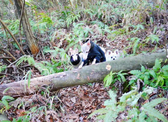 トトとディオは飛び越えたけど、チワは下をくぐってました。