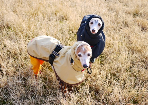 最近寒いので、このコートが手放せません。