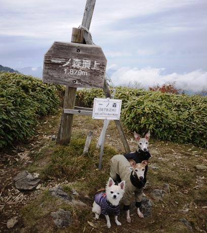 ちなみに、剣山が山頂1955m、次郎笈が1929m。
