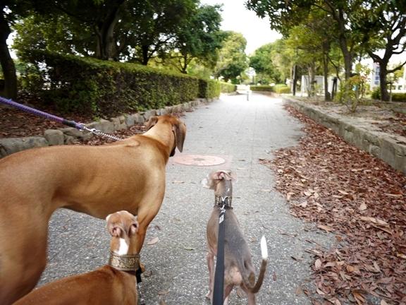 5頭で公園内を歩くと、さすがに目立ちます。。。