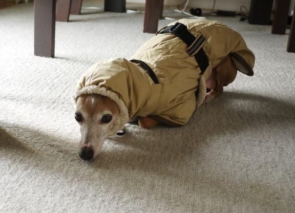 11月11日のポッキーの日・・じゃなくて、犬の日に撮影♪