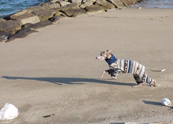 トトは砂浜好き。結構走りました♪