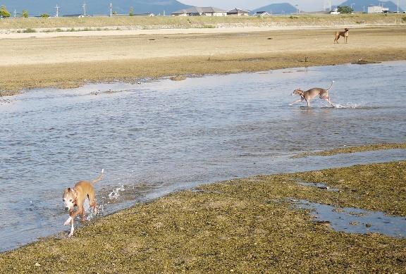 トトはちゃんと浅い所を通るのに、ディオはちょっと深い所を走って、溺れてるのか走ってるのか分からない不格好な走りをしていた。