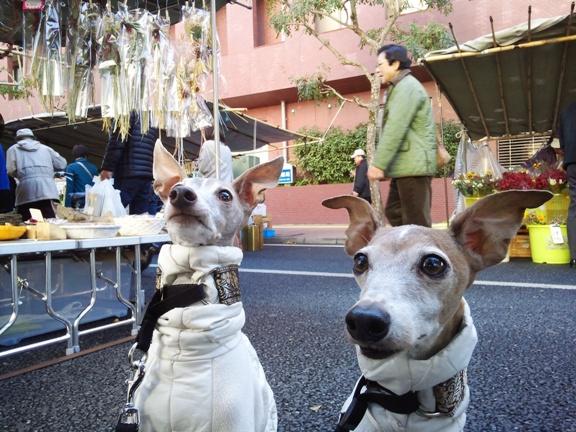道端に座って、飼い主 買い食い中。TDCは何も貰えませんでした。。。