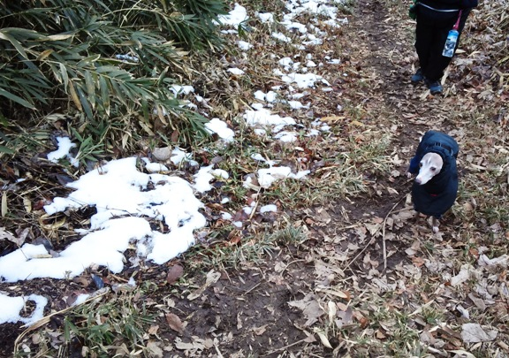 家の辺りは全然だったけど、やっぱり山の上だと雪が積もったのね