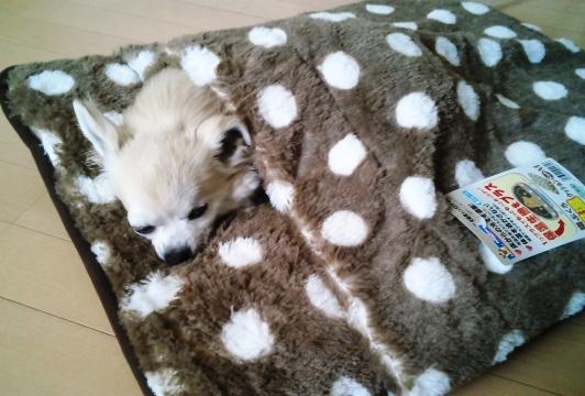 やらせじゃなくて、布団を持ち上げてやると自分から入ってこうやって寝るんです。