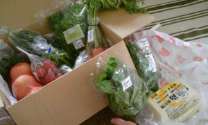 めっけもん市場の野菜と豆腐